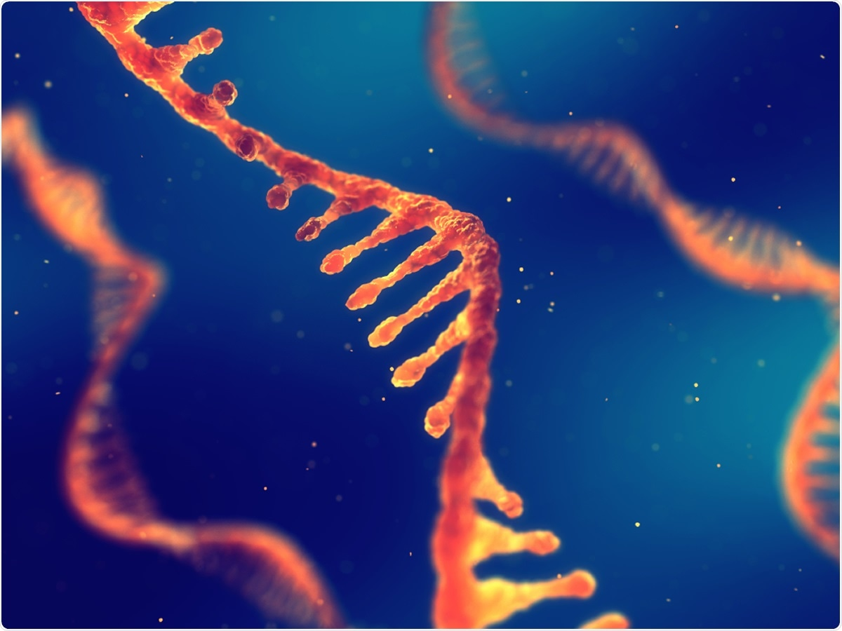 Study: Small Non-coding RNAs: Do They Encode Answers for Controlling SARS-CoV-2 in the Future? Image Credit: nobeastsofierce / Shutterstock