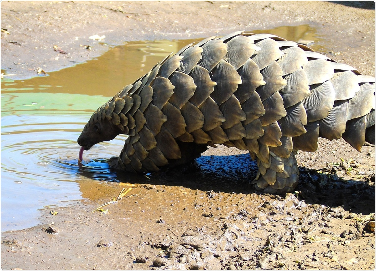 Study: Evidence for ZAP-independent CpG reduction in SARS-CoV-2 genome, and pangolin coronavirus origin of 5′UTR. Image Credit: Krystinaclaire / Shutterstock