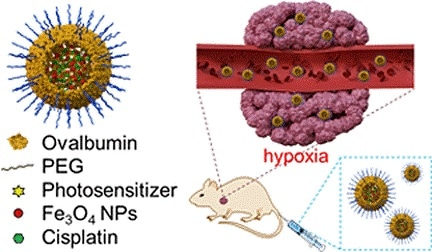 Scientists combine a chemotherapeutic and photodynamic approach to fight cancer