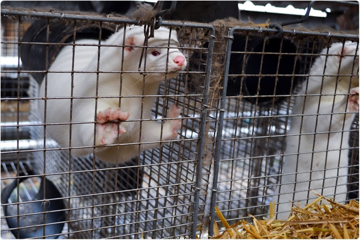Study: Transmission of SARS-CoV-2 on mink farms between humans and mink and back to humans. Image Credit: Lynsey Grosfield / Shutterstock