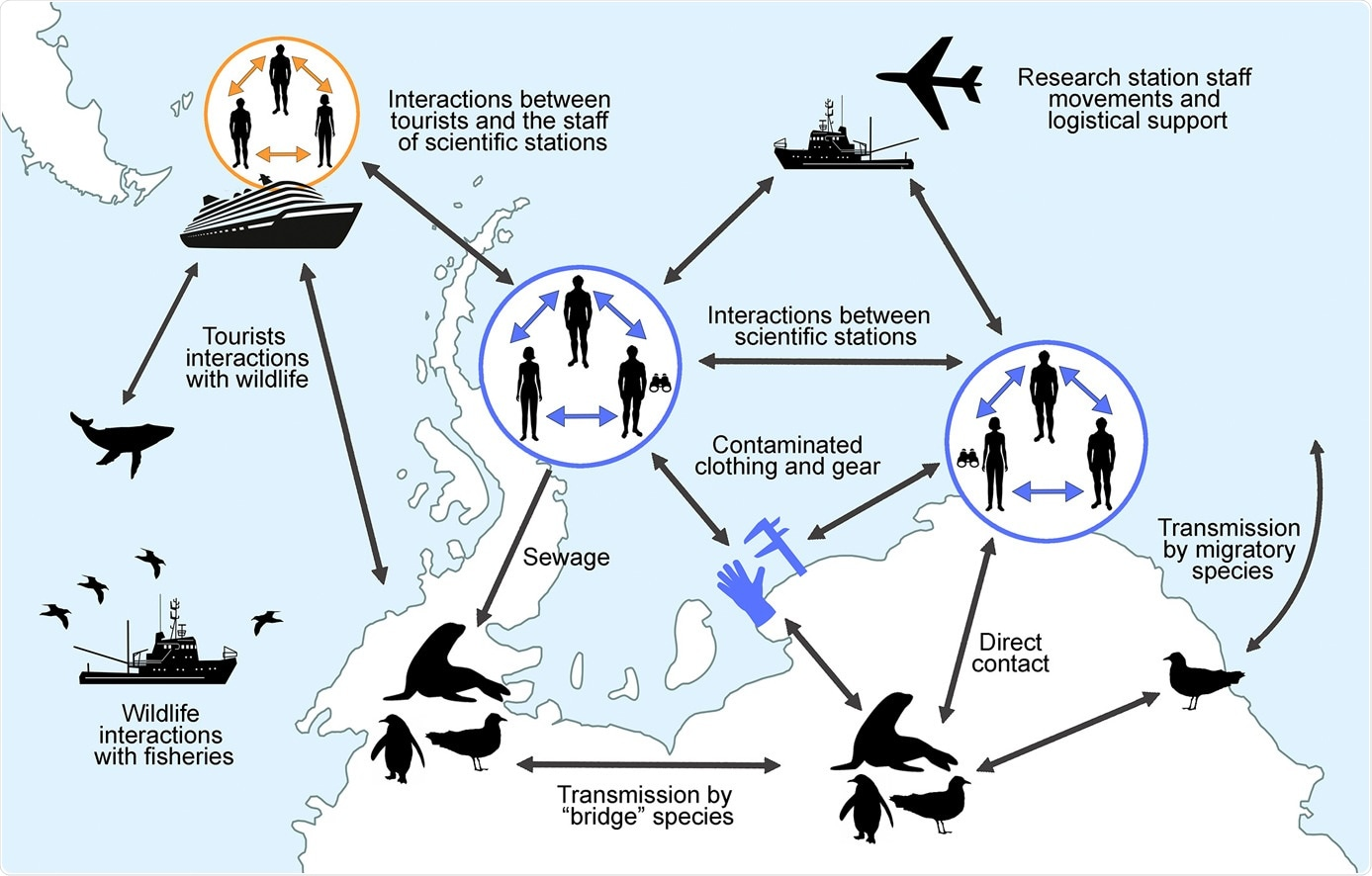 Study: Risk assessment of SARS-CoV-2 in Antarctic wildlife.