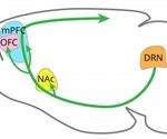 Serotonin is vital to the regulation of patience