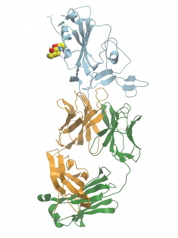 Crystal structure of SARS-CoV-2 antibody with RBD. PDB ID: 7BWJ(Zhang et al 2020). Image generated with Molsoft ICM Browser.
