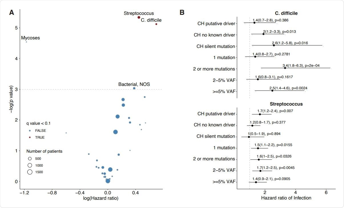 Association between CH and risk of infection in solid tumor patients. A) Volcano plot of the log(Hazard ratio) of infection with CH using multivariable cox proportional hazards regression. B) Association between CH subtype defined by putative driver status and risk of Clostridium Difficle and Streptococcus/Enterococcus infection using cox proportional hazards regression. All models were adjusted for age, gender, race, smoking, diabetes, cardiovascular disease, COPD/asthma, cancer primary site (if history of malignancy), exposure to cytotoxic cancer therapy.