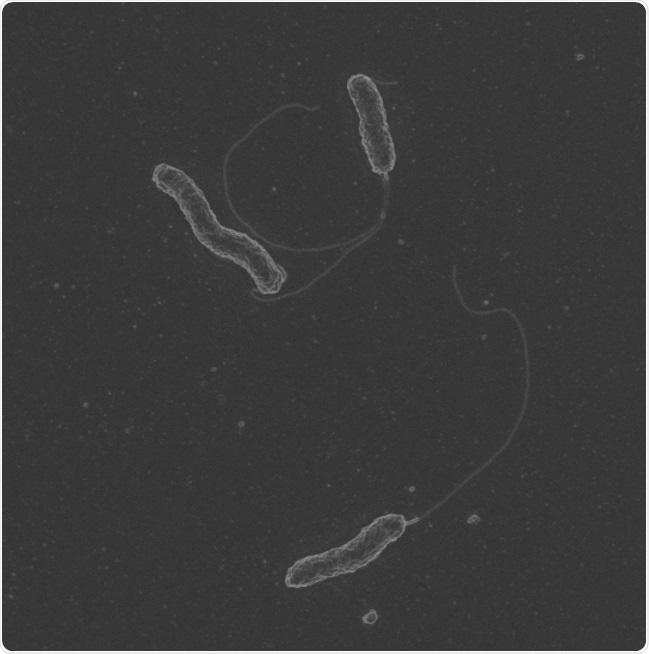 La colitis ulcerosa severa conectó a una deformación nuevo-descubierta de bacterias orales