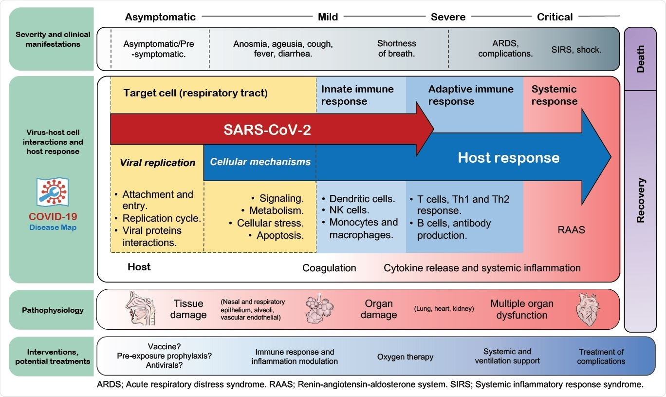 Overview of the map in the context of COVID-19 progression. Pathways and cell types involved in the sequential stages of COVID-19, including some of the most common clinical manifestations and medical management from the moment of infection to the disease resolution, are shown. The distribution of the elements is for illustrative reference and does not necessarily indicate either a unique/static interplay of these elements or an unvarying progression.