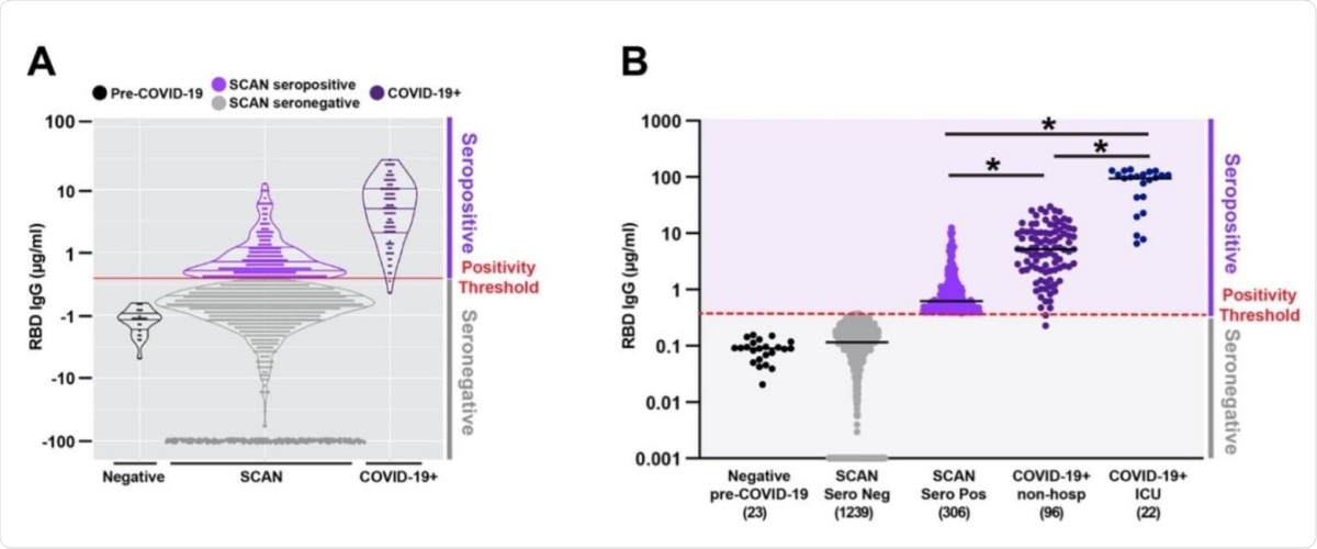 Quantitative measure of IgG directed to the receptor binding domain of SARSCoV-2 spike glycoprotein. Samples were acquired through the Screening for Coronavirus Antibodies in Neighborhood (SCAN) between June 24, 2020 and September 6, 2020 (n= 1545). A) Overlap between the IgG range seen in the community-acquired SCAN seropositive samples (light purple) and non-hospitalized COVID-19+ seropositive samples (dark purple, far right). B) 19.8% (306 of 1545) of SCAN samples were seropositive with a median IgG concentration of 0.62 µg/ml SCAN for the seropositive group. The median concentration of the seronegative SCAN group was 0.11 µg/ml. As a comparator, shown is the range of IgG detected from 96 non-hospitalized and 22 ICU hospitalized individuals with COVID-19 documented by a positive nucleic acid test for SARS-CoV-2 virus. The median IgG concentration was 5.2 µg/ml for the non-hospitalized COVID-19+ group and 98.5 µg/ml for the ICU hospitalized COVID-19+ group. The SARS-CoV-2 RBD IgG ELISA seropositive threshold is marked by the red line at 0.39µg/ml. Two hundred and forty-four seronegative samples with an IgG concentration below 0.001 were plotted at 0.001. Comparing seropositive groups * p<0.0001 by Wilcoxon-Mann-Whitney Test. Both seronegative groups are significantly different than all seropositive groups.