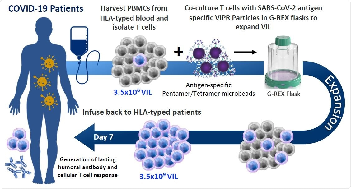 Allogeneic VIL Therapy Platform: An adoptive cell therapy for the treatment of individuals suffering from severe symptoms of COVID-19. a, Schematic for a COVID-19 cell therapy in which PMBCs are collected from the blood of HLA-typed hospitalized patients and total T cells isolated. T cells are stimulated with HLA-matched MHC-I/MHC-II antigen-specific SARS-CoV-2 VIPR beads to enrich and expand CD4+ and CD8+ T cells with TCRs specific for the SARS-CoV-2 antigen epitopes. These antigen-specific VIL expand at an average of 1,000-fold prior to adoptive transfer back to HLA-matched patients to mediate a T cell immune response to support the eradication of the SARS-CoV-2 virus and to engender protective immunity against repeat infection.