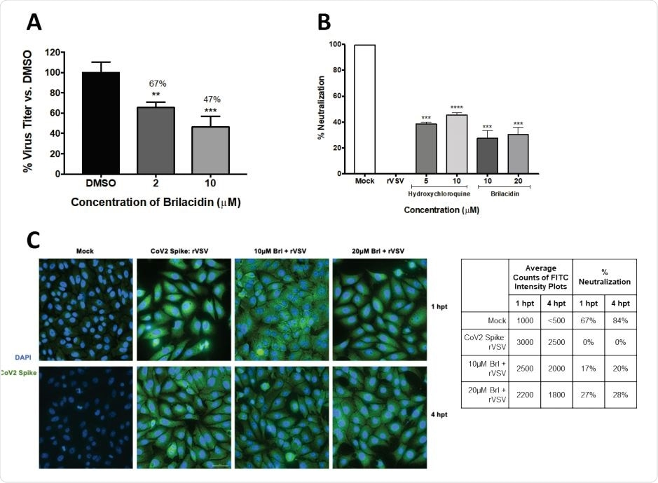 Brilacidin inhibits SARS-CoV-2 replication (Vero cells) (A) Vero cells were pretreated for 2h with 2 or 10μM brilacidin, infected with SARS-CoV-2 non-directly at MOI 0.1 for 1h, and post-treated with media containing brilacidin as described in Materials and Methods. At 16hpi, viral supernatants were evaluated by plaque assay as described in Materials and Methods. Figure 2B, 2C. Brilacidin appears to impact entry of SARS-CoV-2 (Vero cells) (B) Brilacidin was measured at 10 and 20μM for neutralization activity against a luciferase-expressing pseudotyped virus (rVSV) containing the SARS-CoV-2 spike protein using luciferase assay in Vero cells at 24hpt as described in Materials and Methods and compared to neutralization activity of hydroxychloroquine. (C) Vero cells were treated with 10 or 20μM brilacidin for neutralization activity against SARS-CoV-2 rVSV, and cells imaged and quantified using fluorescent microscopy and FITC surface intensity plots at 1 and 4hpt as described in Materials and Methods. Graphs are representative of one independent experiment performed in technical triplicates (n=3). Brl indicates brilacidin. **p<0.0021, ***p<0.0002, ****p<0.0001.