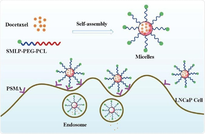 Preparation and endocytosis of DTX loaded polymeric micelles targeted to PSMA12