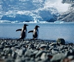 Researchers assess risks posed by SARS-CoV-2 to Antarctica wildlife