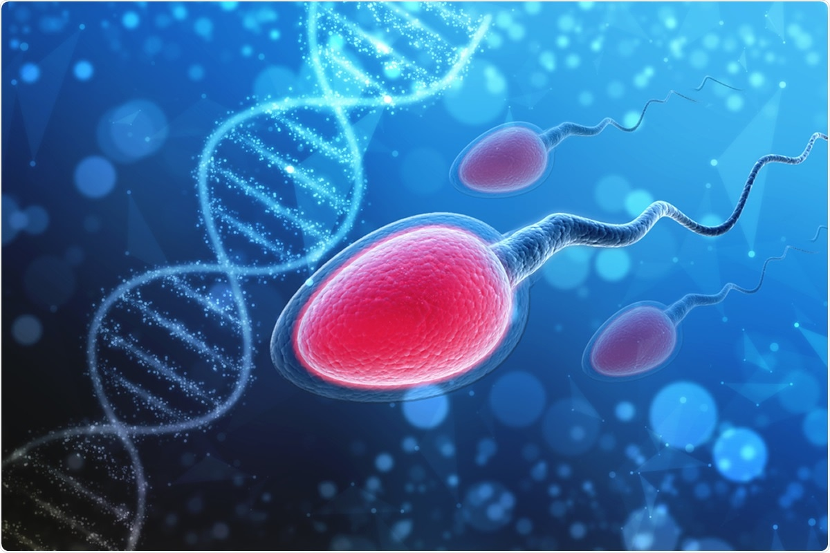 Study: The other side of COVID-19 pandemic: Effects on male fertility. Image Credit: Blackboard / Shutterstock