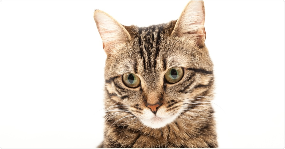 Study: Transmission of SARS-CoV-2 in domestic cats imposes a narrow bottleneck. Image Credit: Sozon / Shutterstock