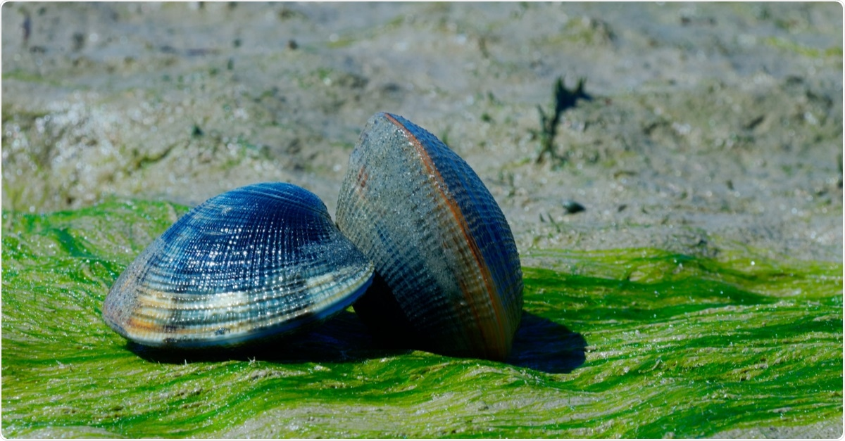 Study: Molluscan Compounds Provide Drug Leads for the Treatment and Prevention of Respiratory Disease. Image Credit: KingQoala / Shutterstock