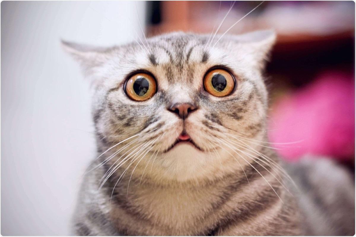 Estudo: Um exemplo do agregado familiar evidencia um derramamento mais curto de SARS-CoV-2 nos gatos naturalmente contaminados comparados a seus proprietários humanos. Crédito de imagem: Momento real/Shutterstock