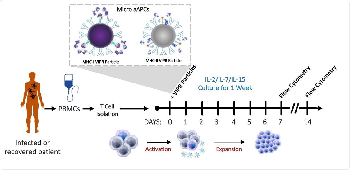 Detection and enrichment of antigen-specific Virus Induced Lymphocytes (VIL) in CMV infected individuals. a, Strategy for the isolation, stimulation and enrichment of CMV antigen-specific T cells from donor PBMCs.