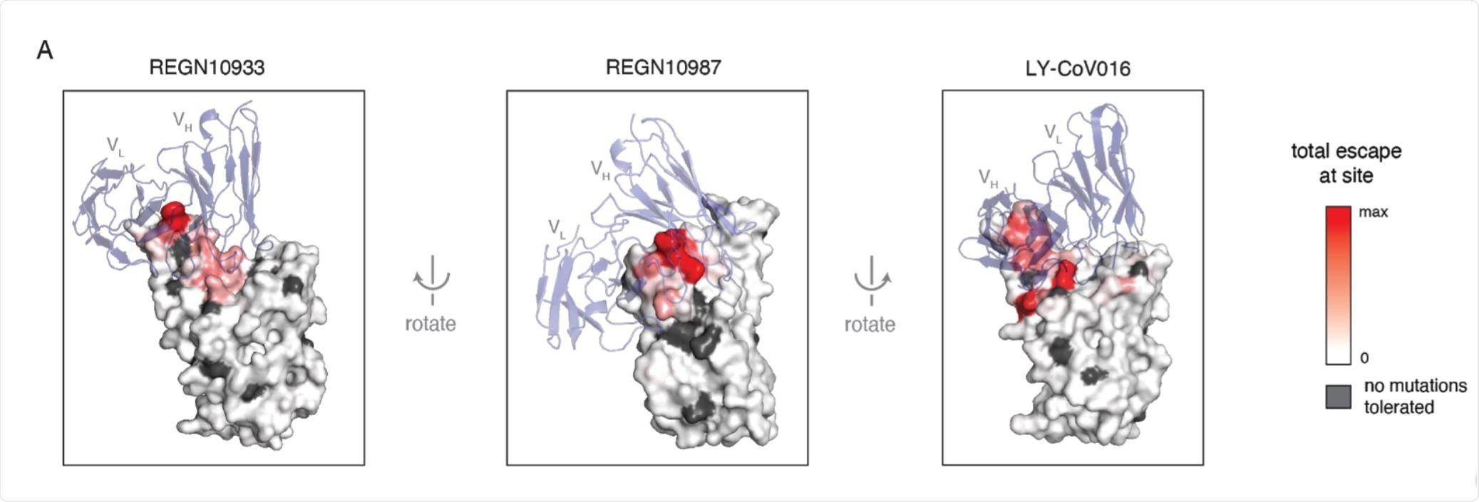 Structural context of escape mutations.
