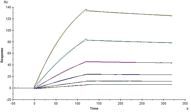 The binding affinity of SARS-CoV-2 S trimer (Cat. No.SPN-C52H9) and human ACE2 (Cat. No. AC2-H5257) was evaluated using Biacore. The KD was 5.82 nM