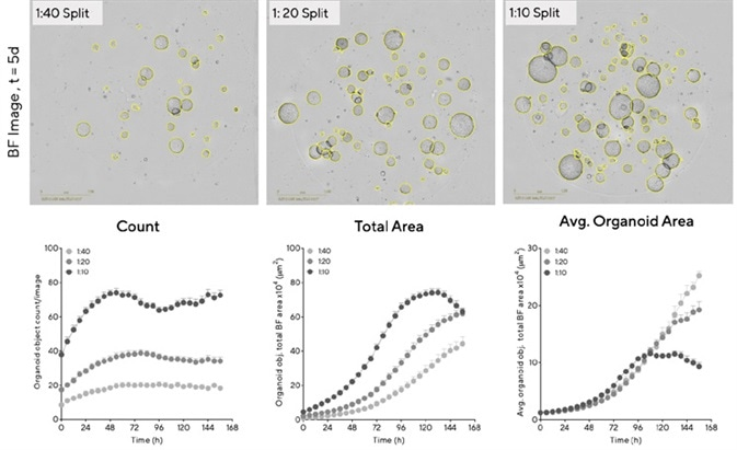 Determine optimal conditions for maximal organoid expansion. Mouse hepatic organoids were embedded in Matrigel® domes (100%) in 48-well plates at multiple seeding densities. BF Images (5 d post seeding) and time-courses of individual well area and count demonstrate density-dependent organoid growth. Data were collected over 168 h at 6 h intervals. All images captured at 4X magnification. Each data point represents mean ± SEM,