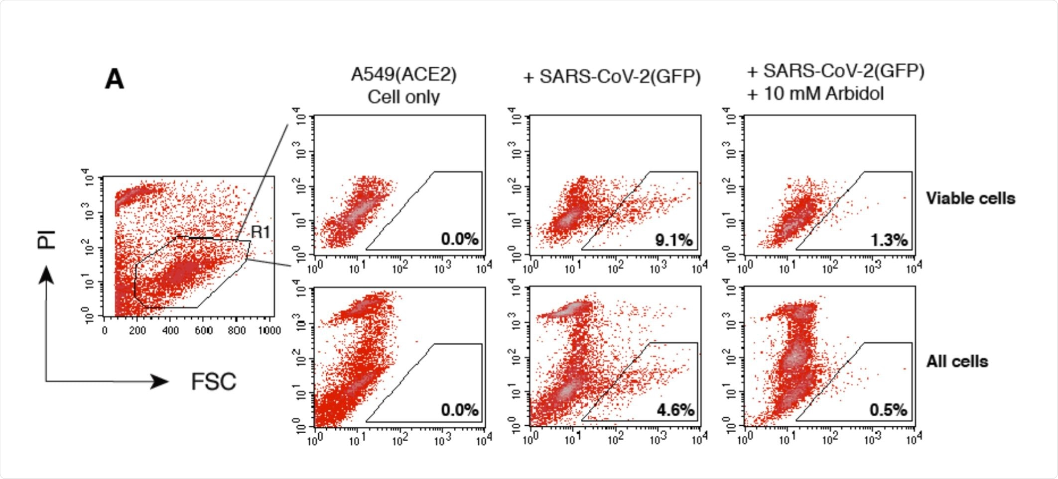 Validation of SARS-CoV-2 S protein pseudotyped reporter viruses for the screening and quantification of antiviral drugs and neutralization antibodies.