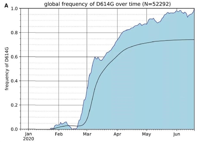 The Frequency of the SARS-CoV-2 S Protein D614G Variant over the Course of the Pandemic Has Increased Nearly to Fixation.