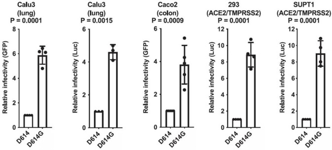 SARS-CoV-2 D614G S Protein Variant Enhances Infectivity of Pseudotyped Lentiviruses in Cell Culture.