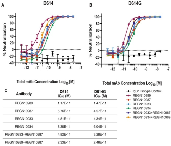 Neutralization Potency of Monoclonal Antibodies Targeting the SARS-CoV-2 S Protein Receptor-Binding Domain Is Not Attenuated by D614G