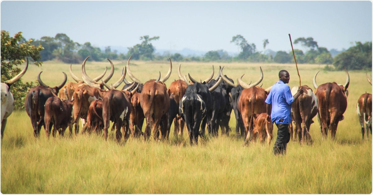 Study: Outbreak of Anthrax Associated with Handling and Eating Meat from a Cow, Uganda, 2018. Image Credit: Tatsiana Hendzel / Shutterstock