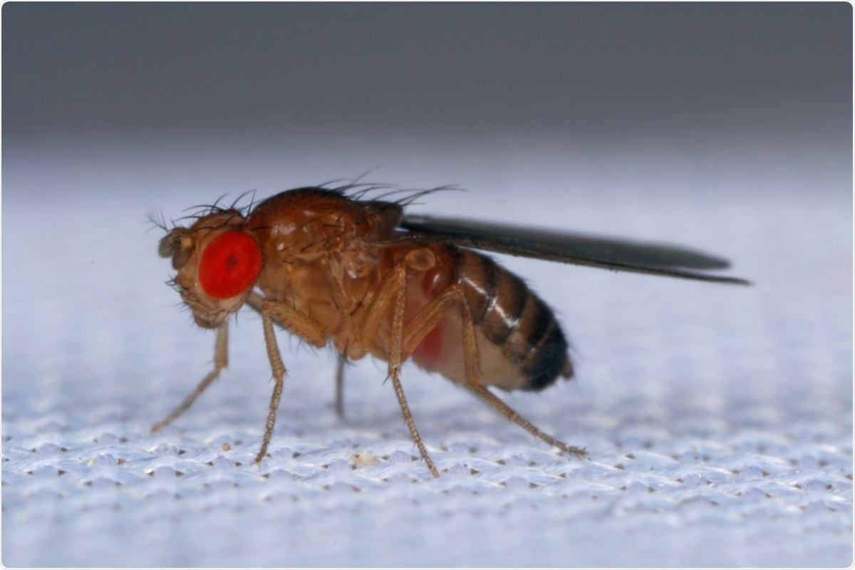 Study: SARS-CoV-2 protein ORF3a is pathogenic in Drosophila and causes phenotypes associated with COVID-19 post-viral syndrome. Image Credit: Tomasz Klejdysz / Shutterstock