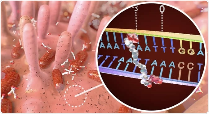 Illustration of colibactin binding to specific DNA sequence. Image Credit: DEMCON | nymus3D, ©Hubrecht Institute