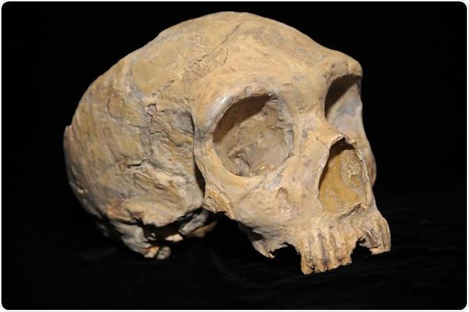 La acción más temprana del entrecruzamiento entre las poblaciones humanas antiguas descubiertas.
