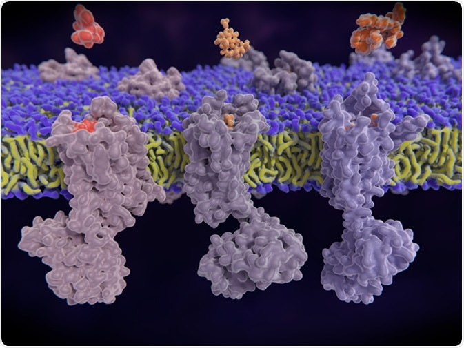 µ-, delta-, kappa-opioid receptors display a role in modulating pain perception; opioid agonists are potent analgesics. Endogenous opioids are enkephalin, dynorphin, endorphin. 3d illustration: Credit: Juan Gaertner / Shutterstock