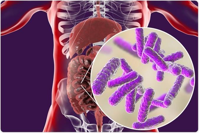 Intestinal microbiome, anatomy of human digestive system, 3D illustration. Image Credit: Kateryna Kon / Shutterstock