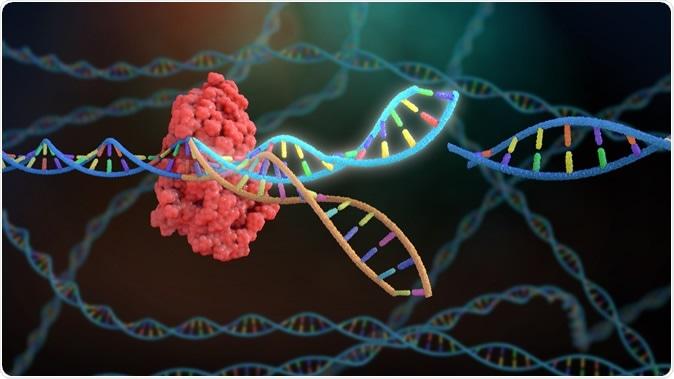 3D rendant la retouche de Crispr ADN. Crédit d