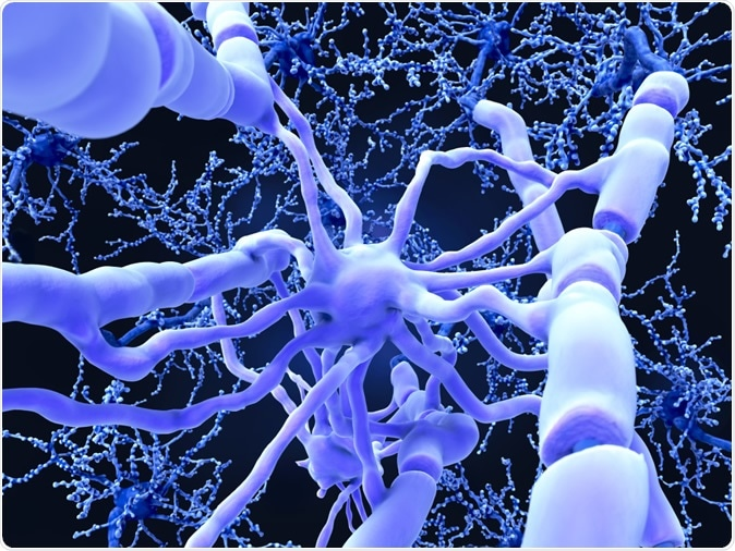 Oligodendrocyte forms insulating myelin sheaths around neuron axons in the central nervous system. Image Credit: Juan Gaertner / Shutterstock