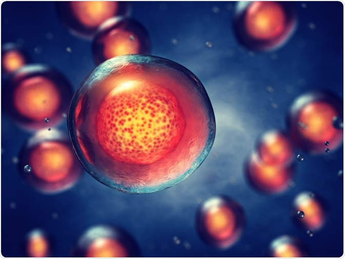 Embryonic stem cells, 3d illustration. Image Credit: nobeastsofierce / Shutterstock