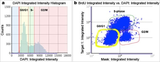 Flow-like data analysis and presentation generated by Celigo Imaging Cytometer. Fluorescence intensity (a) histogram and (b) scatter plot.