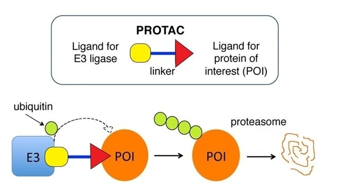 PROTAC mechanism of action. The heterobifunctional molecule comprises of an E3 ligase ligand (red square), a chemical linker (blue bar) and ligand for the protein of interest (black triangle).