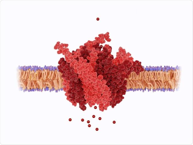 Sinalização do cálcio