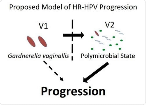 Model of HPV and microbiome interactions. Image Credit: PLOS Pathogens
