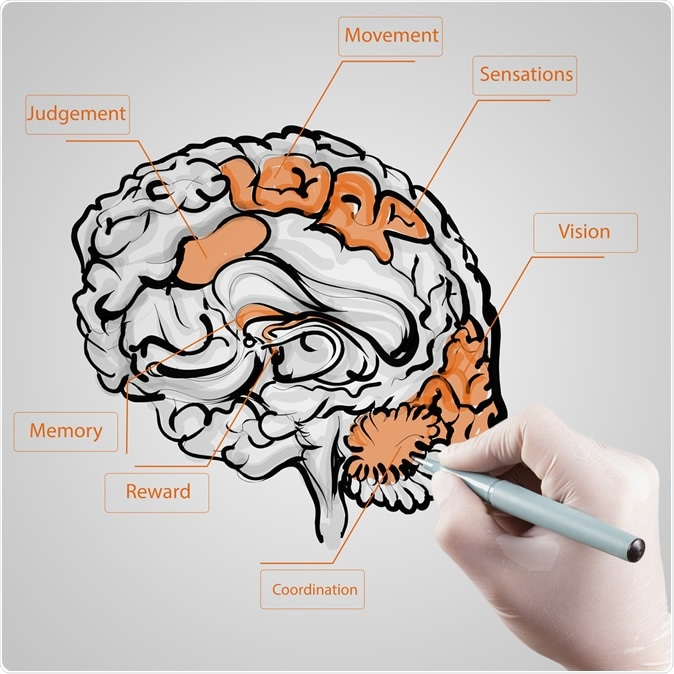 La dopamina asciende esfuerzo cognoscitivo orientando las ventajas comparado con costos de trabajo cognoscitivo. Haber de imagen: todo posible/Shutterstock