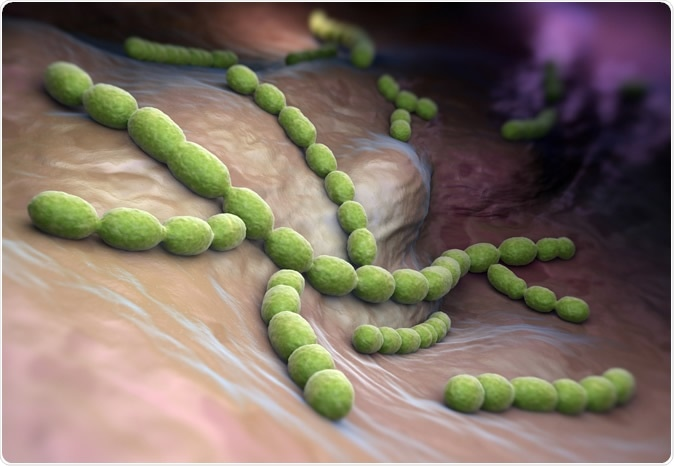 Streptococcus pneumoniae. Gram-positive coccus shaped pathogenic bacteria. Image Credit: Tatiana Shepeleva / Shutterstock