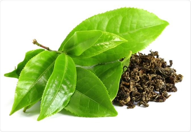 Feuille de thé verte. Crédit d