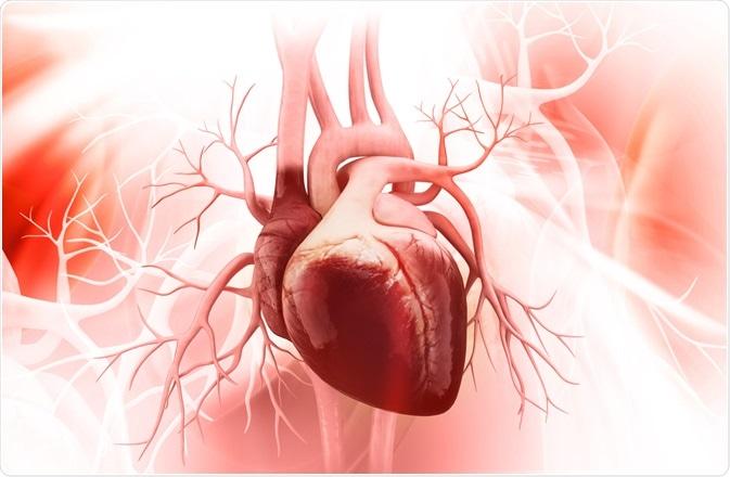 Magnetic Resonance Imaging, heart health