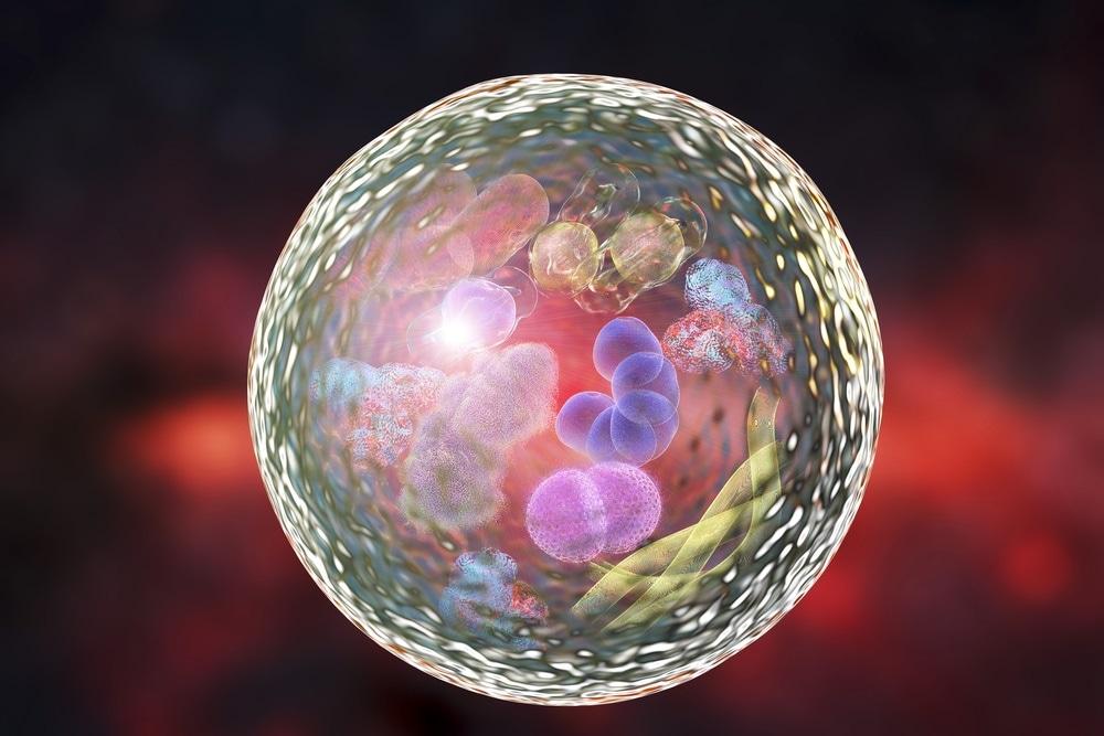 cellular degradation