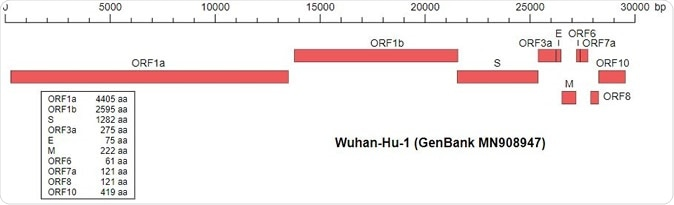 Wu,F., Zhao,S., Yu,B., Chen,Y.-M., Wang,W., Hu,Y., Song,Z.-G., Tao,Z.-W., Tian,J.-H., Pei,Y.-Y., Yuan,M.L., Zhang,Y.-L., Dai,F.-H., Liu,Y., Wang,Q.-M., Zheng,J.-J., Xu,L., Holmes,E.C. and Zhang,Y.-Z. A novel coronavirus associated with a respiratory disease in Wuhan of Hubei province, China. Accession MN908947.