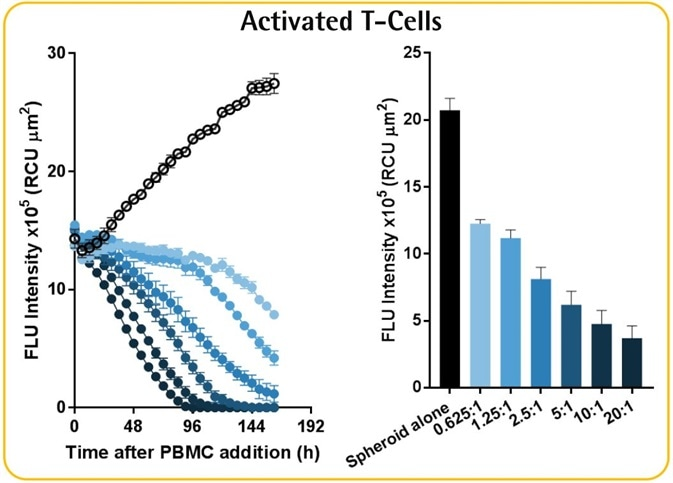 Immune Cells Killing 3D Tumor Spheroids in 96-Well Live-Cell Assay