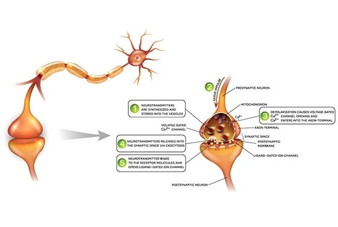 Recent Research Into Neurodegenerative Diseases