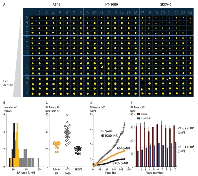 Miniaturizing spheroid growth and shrinkage assay for assay optimization. Comparison of temporal growth profiles of A549, HT-1080 and SKOV3 cells in a miniaturized 3D spheroid assay. (A) All cells seeded at a density ranging from 310 to 7,500 cells per well plated in a ULA round-bottom 384-well plate. Media was replenished 72 h post seeding. (A) Microplate overview image shows Brightfield segmentation mask at 204 h post-media replenishment. (B) Histogram compares the distribution frequency of the Brightfield area (µm2) across all cell types plated at 2,500 cells/well at this time-point. (C) Variability plot analysis shows the largest Brightfield of individual wells at 204 h. (D) Time course plots represent the differential temporal profile of the Largest Brightfield Object Area metric (µm2) across the cell types. Data were collected over a 204 h period at 6 h intervals, all images captured at 10x magnification. Each data point represents mean ±SEM,