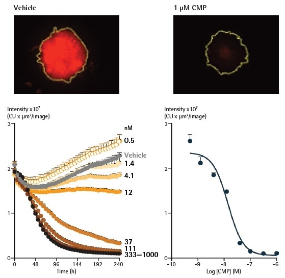 Analysis of spheroids expressing fluorescent proteins enables spheroid viability determination. Representative images taken at 240 h show a strong red fluorescent signal in a vehicle control spheroid, in contrast to a marked loss in red fluorescence in the CMP-treated spheroid. The yellow boundary in the images represents the Brightfield mask outline. Monitoring the integrated intensity from within the Brightfield boundary highlights a gradual increase in fluorescence under vehicle control conditions (grey symbols) corresponding to the growth of the spheroid. Upon treatment with CMP, a concentration-dependent reduction in integrated fluorescence is observed, with abolishment of fluorescence with the highest concentration tested after 240 h.